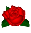 Rose closeup on a white background vector image