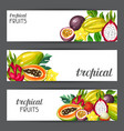 banners with exotic tropical fruits vector image vector image