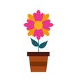 potted flower plant decoration botanical flora vector image vector image