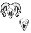 ram skull vector image vector image