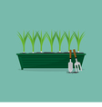 Green Onions Cultivating vector image vector image