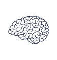 hand drawn brain isolated on white background vector image vector image