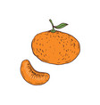 orange icon hand drawn vector image vector image