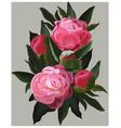 realistic pink peonies flower vector image vector image