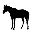 Horse Standing Silhouette vector image vector image