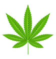 marijuana leaf isolated on white vector image