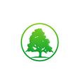 pine tree green ecology logo vector image