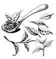 collection of tea leaves vector image