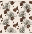 evergreen pine tree branch winter holiday season vector image