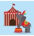 spectacular circus show design vector image