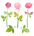 Bright spring roses flowers silhouette