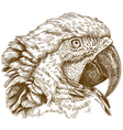 engraving macaw head vector image vector image