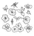 hand drawn elegant petunya vector image vector image