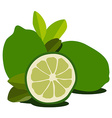 Lime fruit vector image vector image