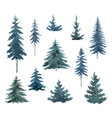 watercolor set with blue fir trees vector image vector image