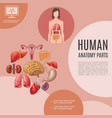 cartoon human anatomy template vector image