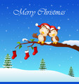 christmas couple owls on the tree branch with sock vector image vector image