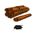 cinnamon stick tied bunch drawing vector image vector image