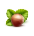 full unpeeled hazelnut with leaves isolated vector image vector image