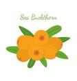 orange sea buckthorn - healthy natural berry vector image