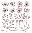 set beautiful cherry tree flowers isolated on vector image
