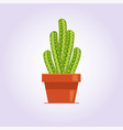 decorative cactus with prickles on the white vector image vector image