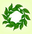 frame from the green tea leaves vector image