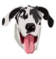 great dane on white background vector image vector image