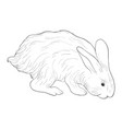 sketch of rabbit vector image