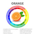 infographics about nutrients in orange vector image vector image