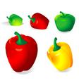 pepper vector image