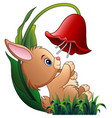 cute little rabbit playing with a flower on white vector image