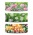 Floral banners collection vector image vector image