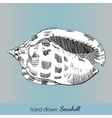 Hand drawn marine seashell vector image vector image