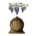 watercolor grape branches and wine barrel vector image vector image