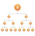 Bitcoin organization tree chart vector image