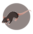 Isometric rat icon vector image vector image