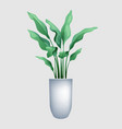 plant with big leaves in a pot vector image