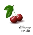Red cherry on a white background vector image