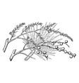 branch of desert fan palm vintage