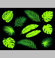 bright green tropical palm leaves silhouettes set vector image