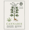 Hand-drawn botanical with cannabis