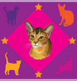 seamless pattern with abyssinian cat vector image vector image