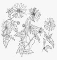 set hand drawn flowers isolated on white vector image vector image