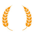 wheat spikelets forming wreath barley spikes vector image