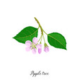 drawing branch aapple tree vector image