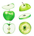 green apple half and slices watercolor fruit vector image