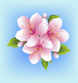 japanese cherry blossom isolated vector image vector image