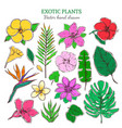 colored exotic and tropical plants set vector image