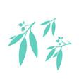 eucalyptus tree vector image vector image